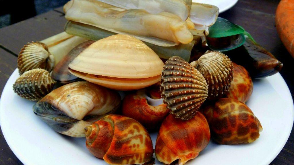 หอยหวาน,หอยตลับ,หายเเครง,หอยเเมลงภู่,หอยหลอด