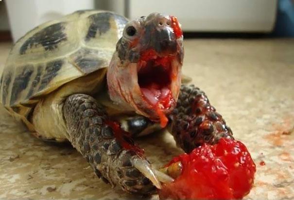 animals-eating-berries-21__605