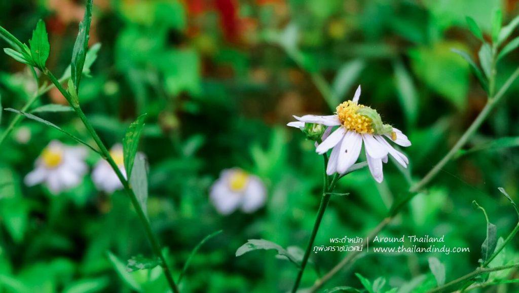 ดอกไม้เมืองหนาว